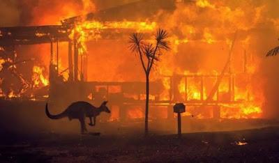 Canguru foge do fogo na Austrália