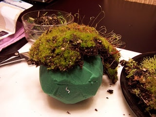 Living Moss Ball Tutorial #creativegreenliving #dollarstorecrafts