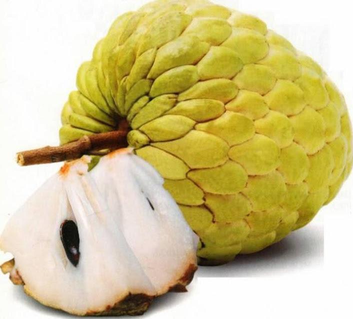 Bibit tanaman buah Srikaya Jumbo manis Aceh