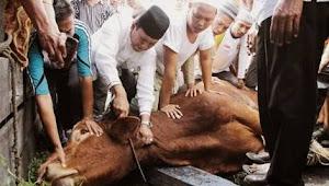 Berikut Tata Cara Menyembelih Hewan Kurban Menurut Islam