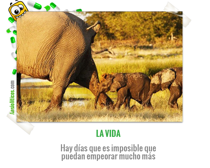 Chiste de Animales con un Elefante con un Día Malo