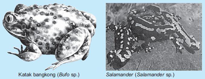 Pengertian Dan Klasifikasi Hewan Vertebrata Hewan Bertulang