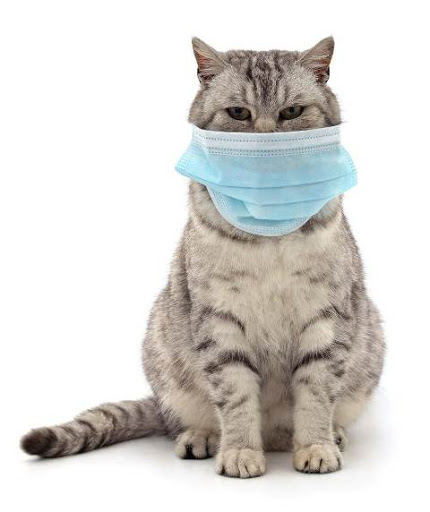 Questions and answers about corona and cats virus | cat and dogs