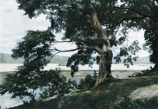pesisir pantai danau toba di simanindo samosir