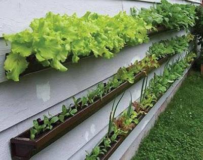 How to Make a Patio Vegetable Garden