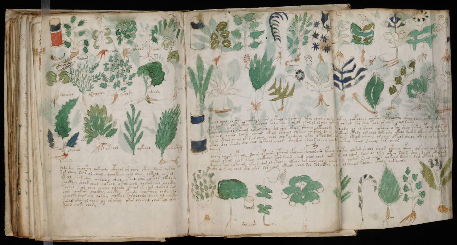 manuscrito176