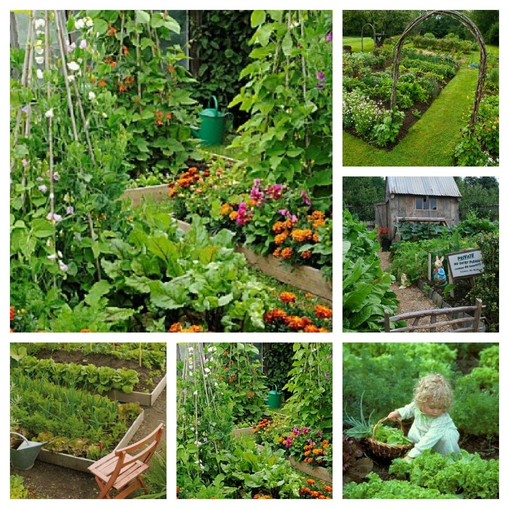 Giardino Cosa Piantare A Febbraio: Tra Orto E Giardino: Nell'Orto E In Giardino