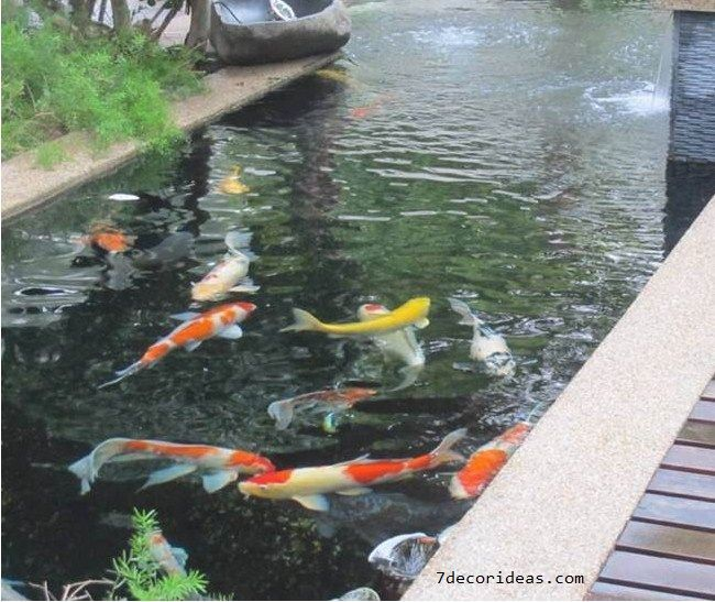 Manfaat Memelihara Ikan Hias