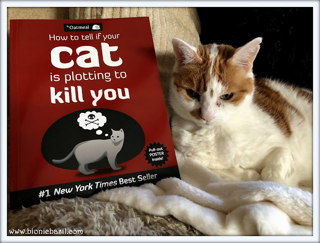 How to tell if your cat is plotting to kill you reviewed by Amber, book review by amber the cat, library cat, cat with books, books with cats, funny book
