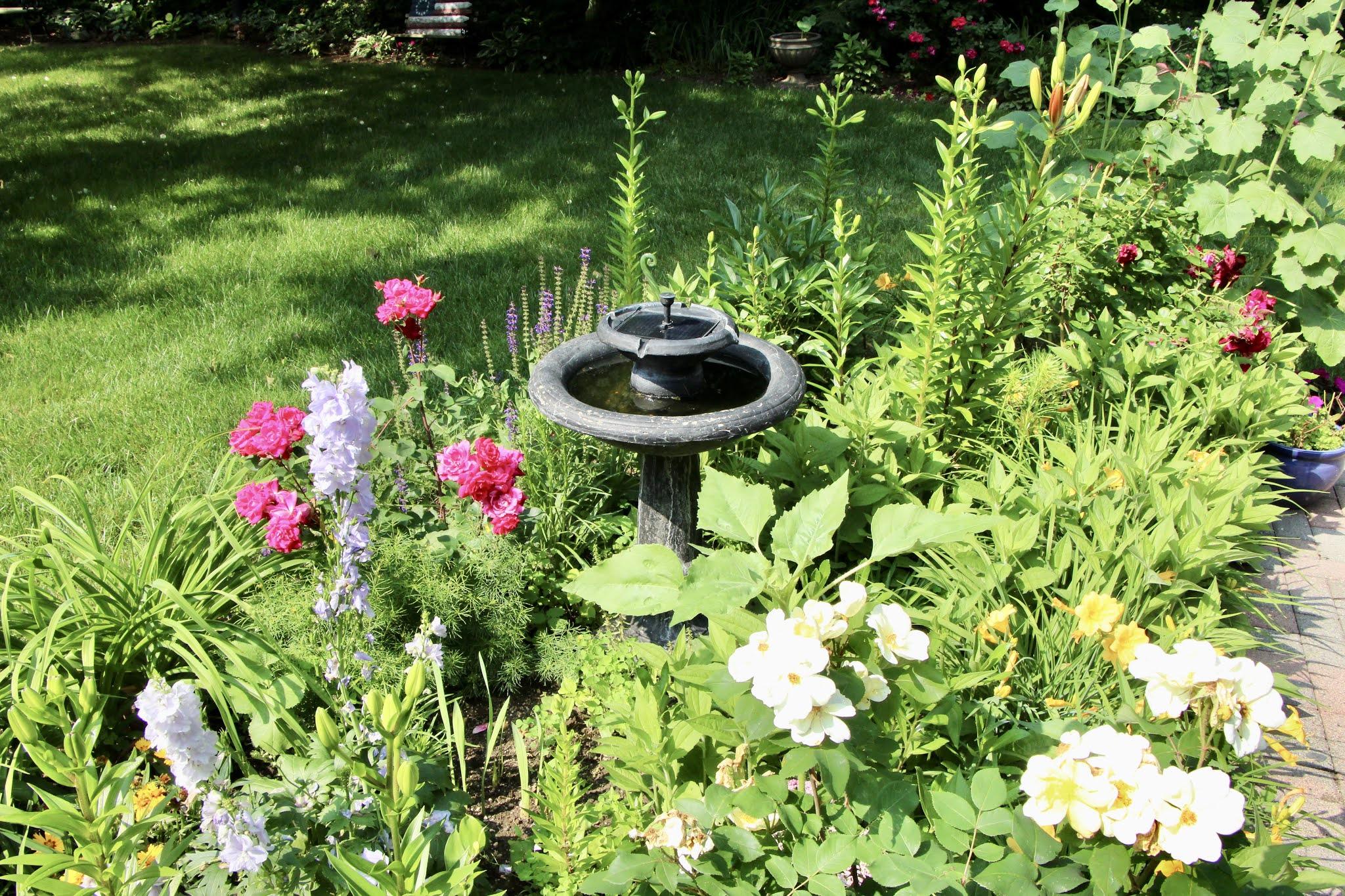 garden, backyard, flowers, long island, summer