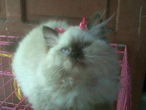 10 Cara Menghilangkan Kutu Kucing Secara Alami di Rumah, Mudah, Ampuh dan Cepat