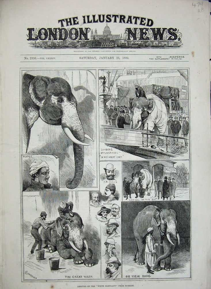 Blog the colorful history and etymology of pink elephant