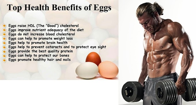 Everything You Need To Know About Eggs Protein ?