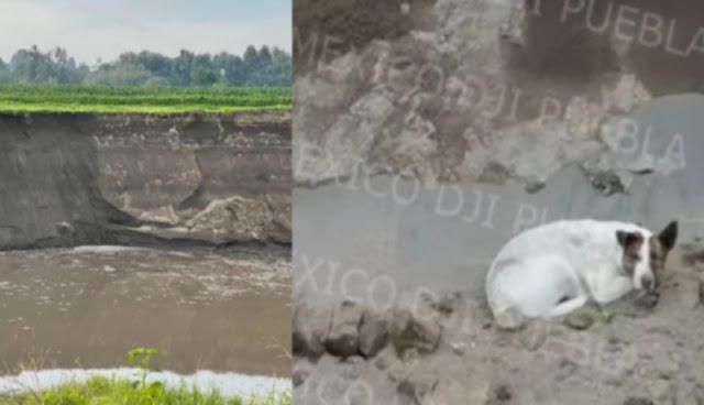"""URGENTE: """"Desaparece"""" el otro perro ubicado dentro del socavón en Puebla, se teme lo peor"""