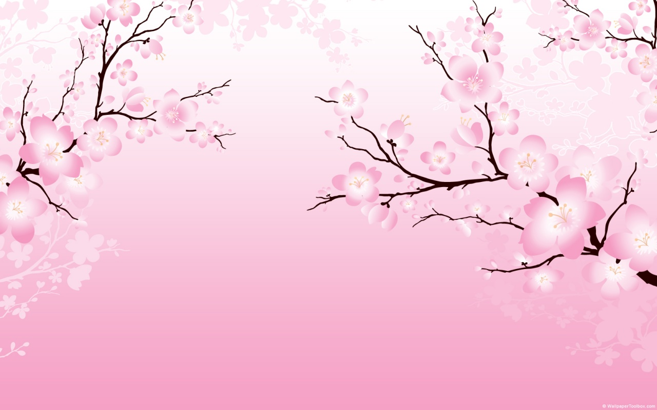 cherry blossom japanese flowers wallpapers (1280 x 800