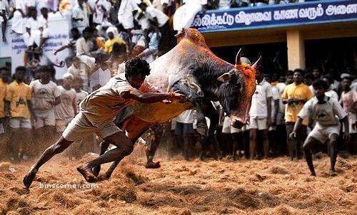 Tamilnadu Jallikattu Heroic Games History Game