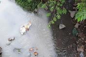 Tìm ra thủ phạm xả thải gây ô nhiễm suối Sọ ở Bình Dương