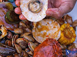 Sensasi Menyantap Hidangan Serba Seafood Dalam Bus Bandara di Yogyakarta