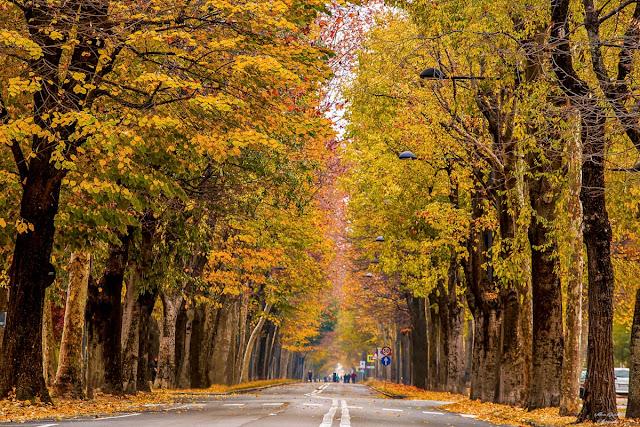 Il Viale degli Angeli, polmone verde di Cuneo.