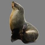 seal in spanish