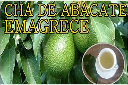 cha-de-folha-de-abacate-emagrece