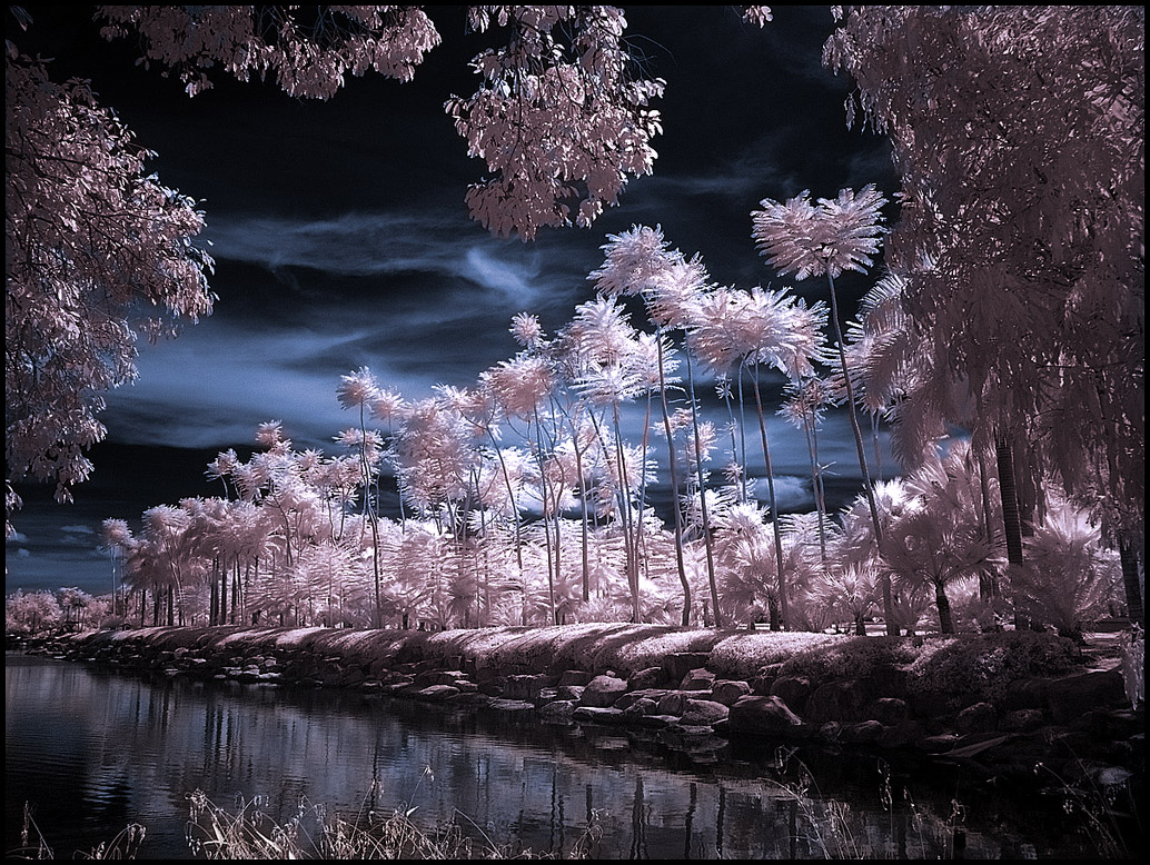 Photograph: >: Infrared Photography