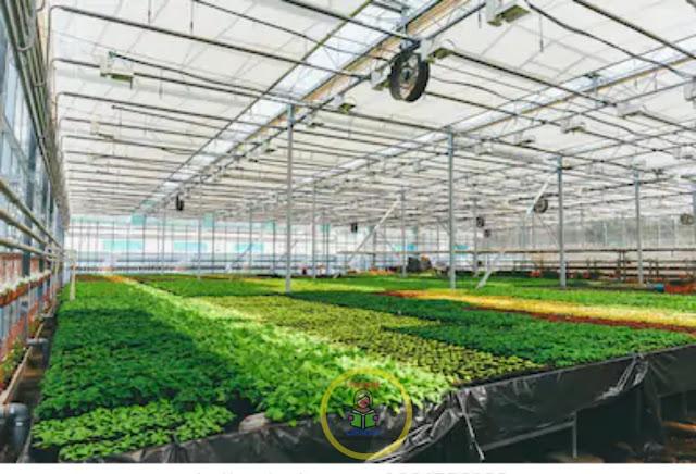 Type-Of-Flower-Or-Nursery-Beds -Soil-Treatment