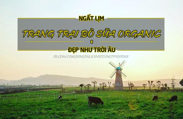 'Chất lừ' với nông trại bò sữa chuẩn Organic đầu tiên ở Việt Nam