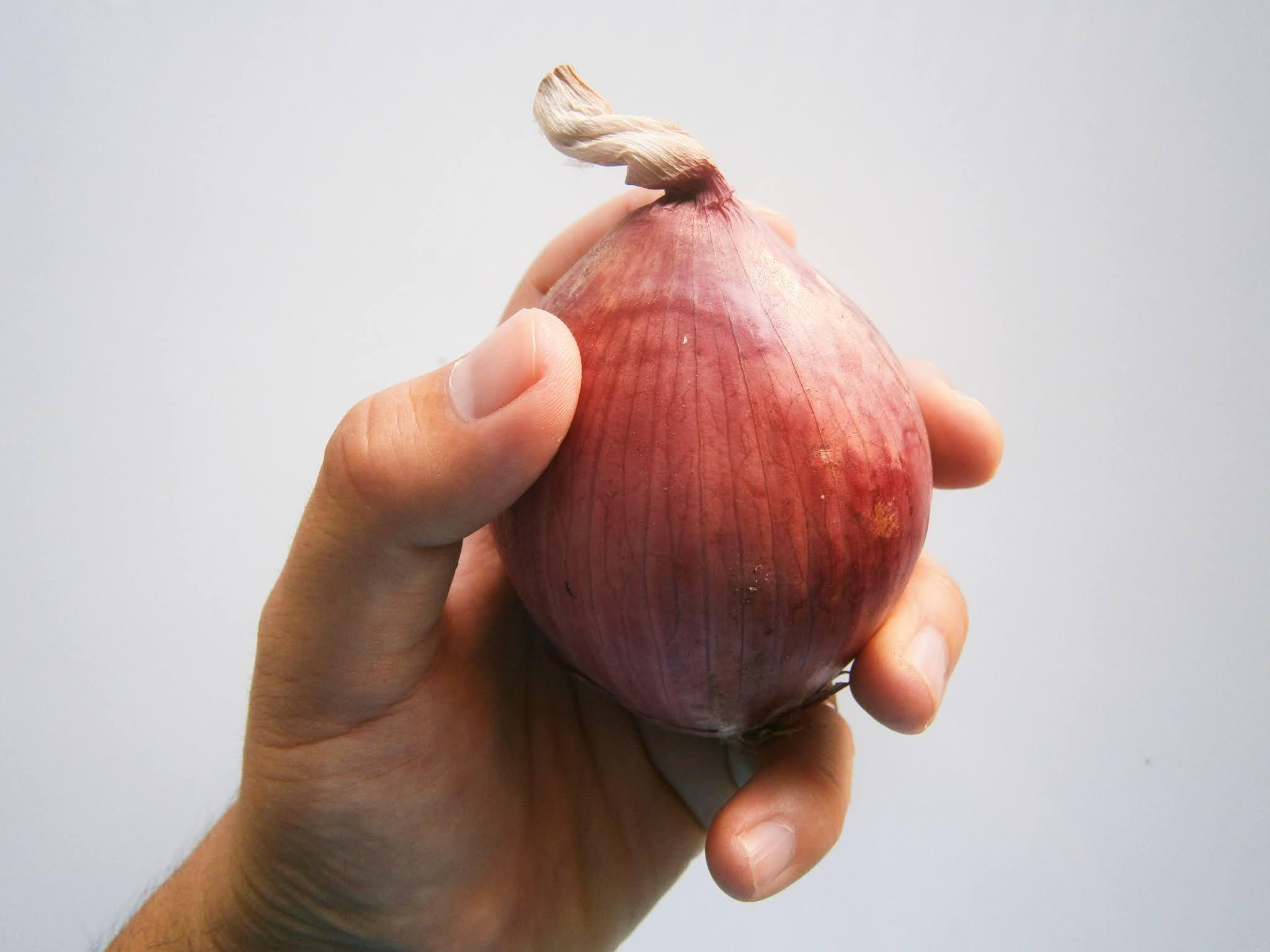 Cabeza de cebolla sostenida de una mano de una persona joven