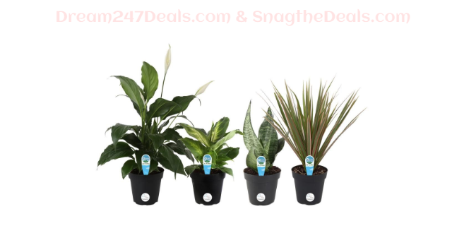 O2  For You Houseplant Collection in 4 in. Grower Pot (4-Pack)