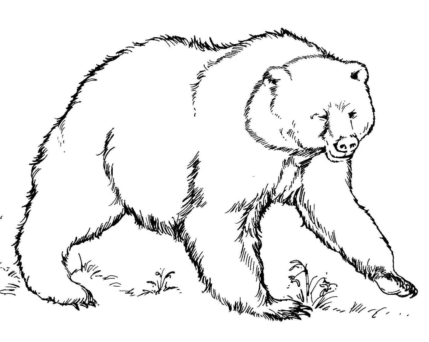 Desenhoss Para Colorir Urso