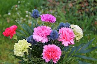 harga bunga anyelir