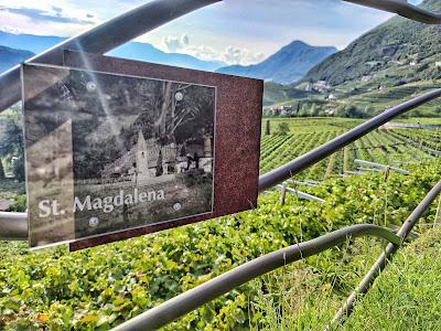 st magdalener vino
