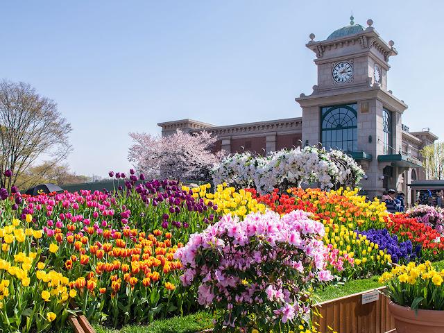Honeymoon ke Korea Selatan - Everland Tulip Festival