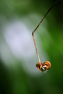 tendril and dew drop