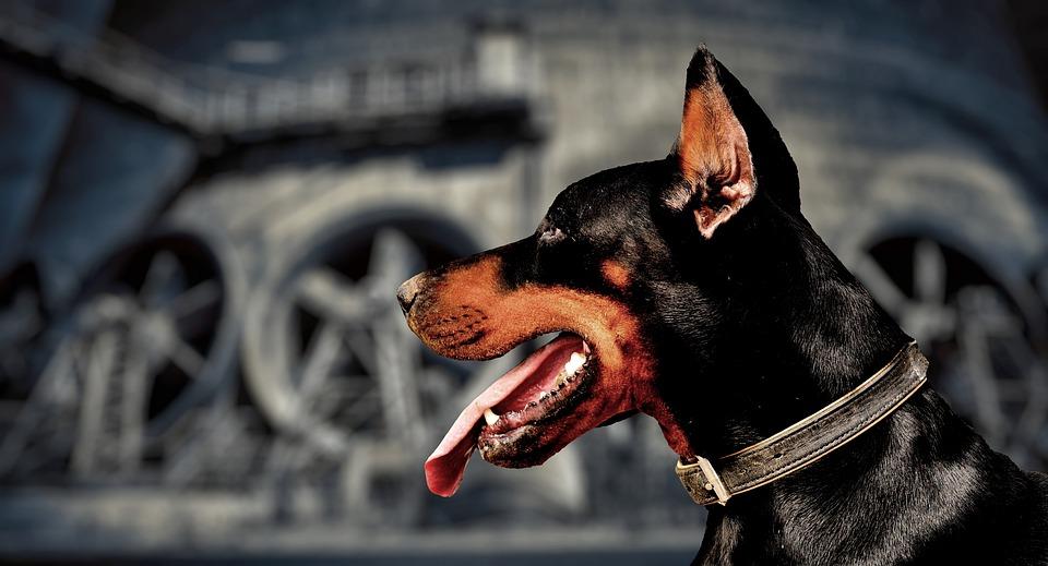 Kenali Penyebab Anjing Peliharaan Menjadi Galak dan Agresif