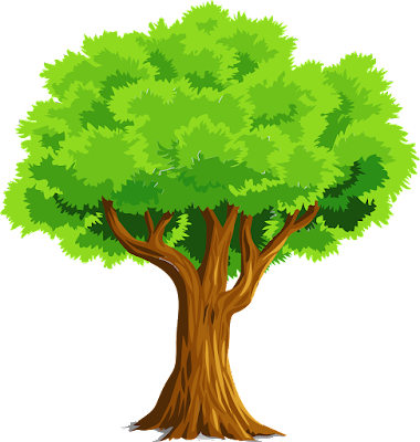 Tree, Getting to know plants, NCERT 6th class science