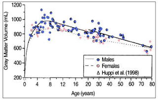 Изменение объема серового вещества мозга с течением возраста
