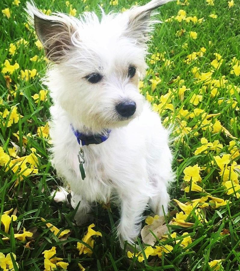 Petsmart Miami Dog Adoption