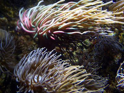 Galway Atlantaquaria, National Aquarium of Ireland