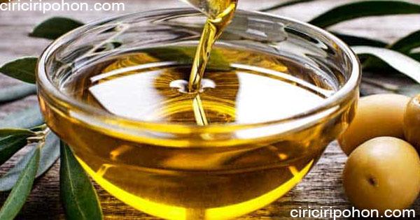ciri ciri pohon minyak zaitun