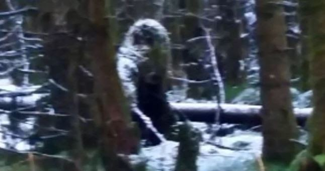 single women in bigfoot The carter farm investigation: bigfoot,  single wide trailers pepper the road side with an occasional average foundation home placed in the mix.
