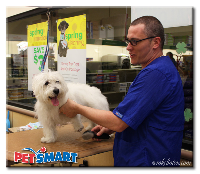 Male PetSmart Groomer brushing White West Highland Terrier