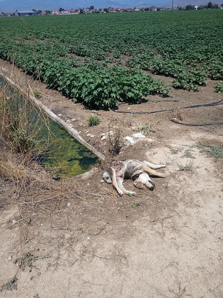 Καταγγελία: Ψεκασμός τοξικών φυτοφαρμάκων κοντά σε κατοικημένη περιοχή στη Φαλάνη