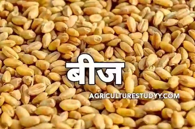 भारत में बीज उत्पादन का महत्व एवं बीज प्रौद्योगिकी का क्षेत्र