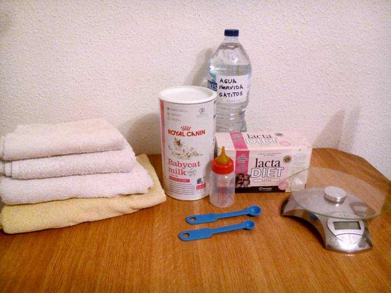 biberon-gatito-leche-toallas-caja-nido