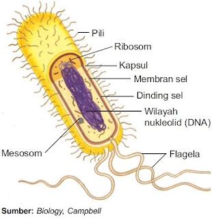Struktur Prokariota