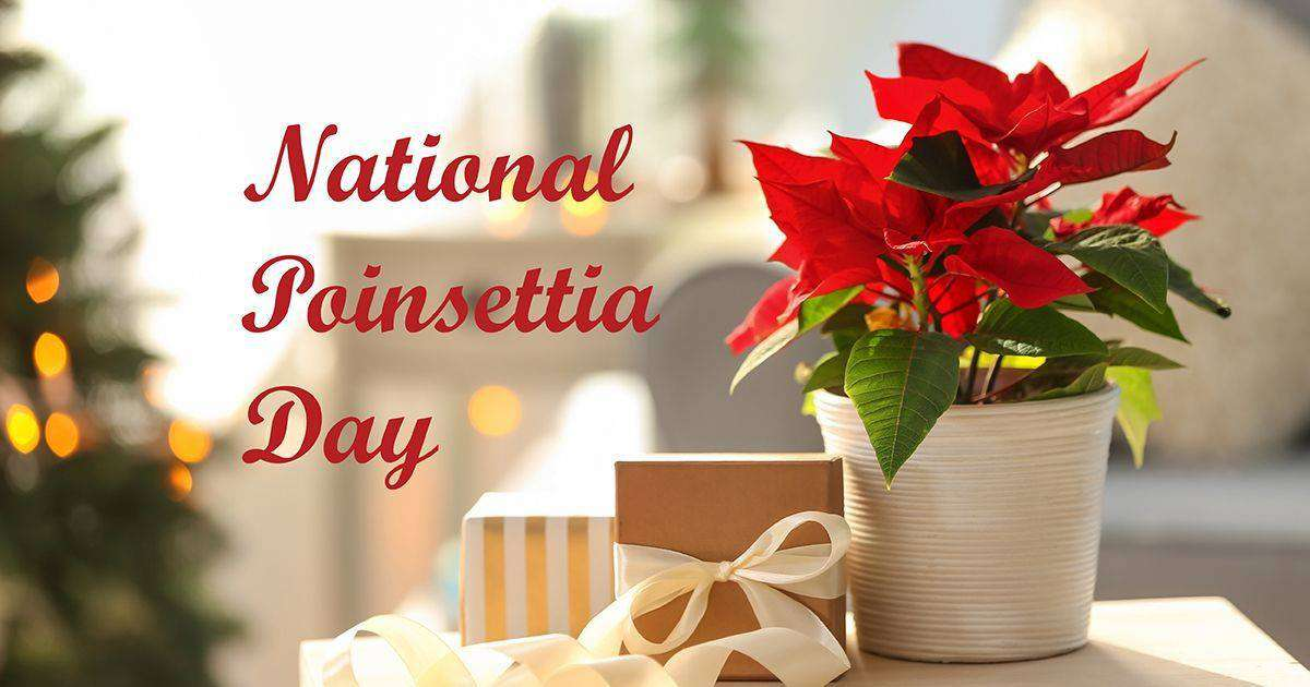 National Poinsettia Day Wishes Sweet Images