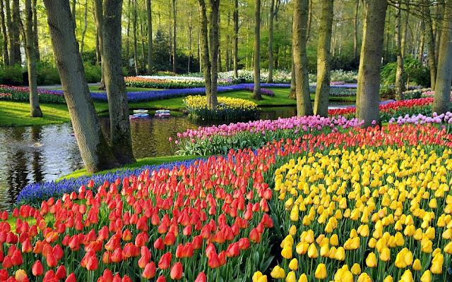 Passeio pelo Jardim de flores Keukenhof em Amsterdã