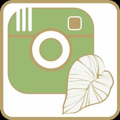 https://www.instagram.com/andypindur/